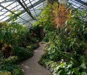 Path in Allan Gardens Conservatory, Toronto 2011-02-19