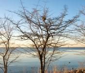Bird nest in tree by Lake Ontario, Toronto 2011-03-30