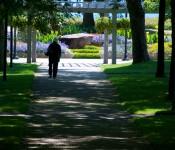 Path in Rosetta McClain Gardens, Toronto 2011-07-24