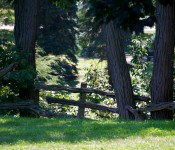 Wooden fence in High Park, Toronto 2011-08-12