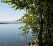 Lakeside tree in Sir Casimir Gzowski Park, Toronto