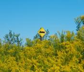 """Bump or uneven pavement"" sign, Tommy Thompson Park, Toronto 2011-09-10"