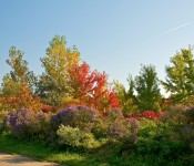 Autumn colours in Woodbine Park, Toronto 2010-10-10