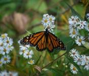 Butterfly in Ashbridge's Bay Park, Toronto 2011-09-26