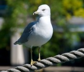 Gull at Harbourfront, Toronto 2011-09-24