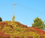Power lines on Don Mills Road, Toronto 2011-10-08