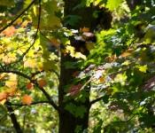 Trees in Ernest Thompson Seton Park, Toronto