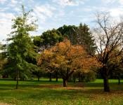 Glimpse of autumn in Edwards Gardens, Toronto 2011-10-11
