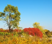 A touch of colour in Tommy Thompson Park, Toronto 2011-10-08