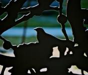 Art installation in Wellesley Magill Park, Toronto 2011-03-15