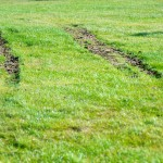 Tire tracks in the grass, Pine Beach Park in Dorval 2011-12-04