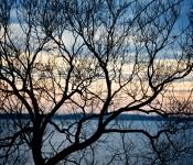 Tree silhouette by Lake Saint-Louis, Dorval 2011-11-27