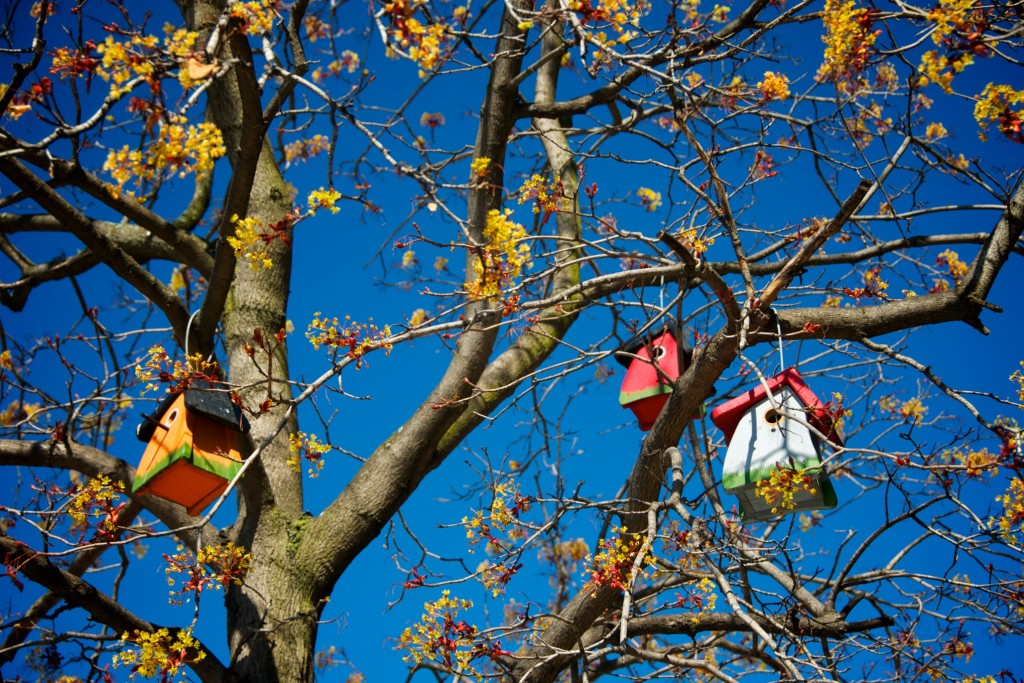Trio of colourful bird houses in a tree on rue Crescent, Montréal 2012-04-29