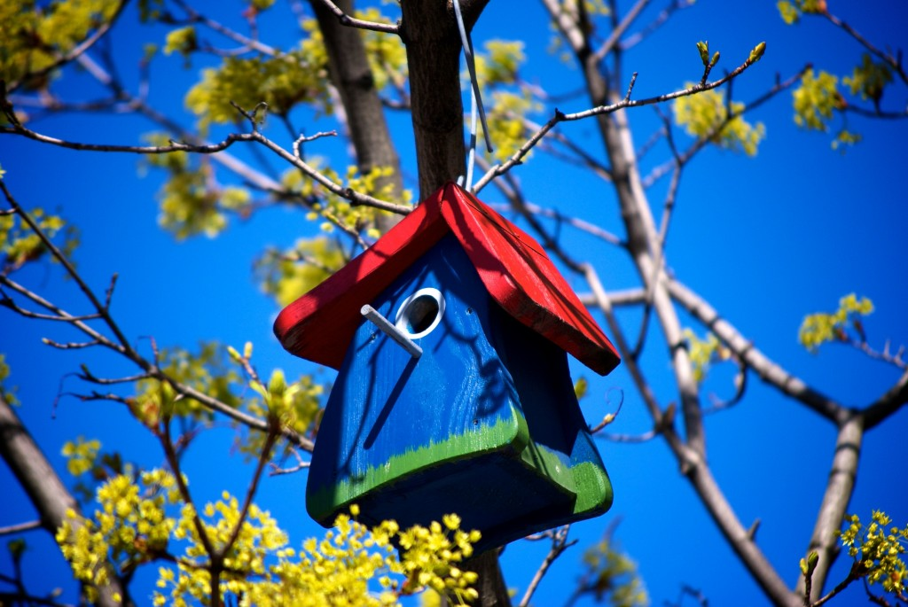 Blue, red and green bird house in a tree on rue Crescent, Montréal 2012-04-29
