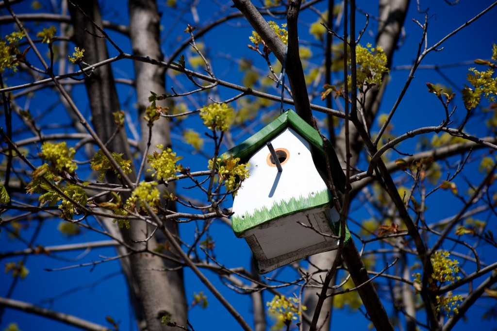 White and green bird house in a tree on rue Crescent, Montréal 2012-04-29
