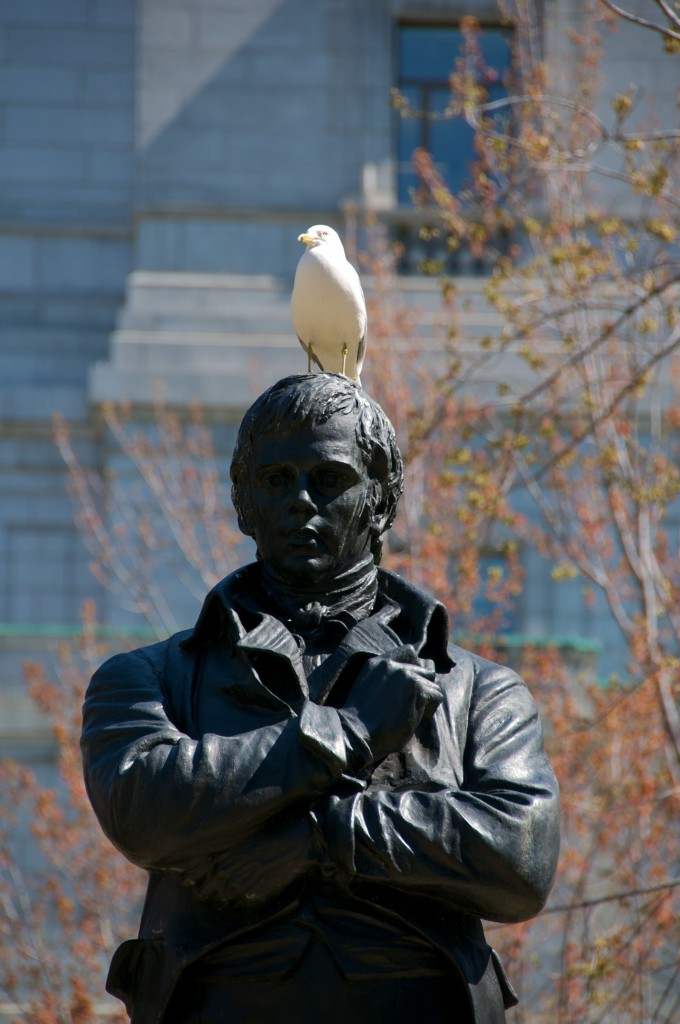 Gull on the statue of Robert Burns in Square Dorchester, Montréal