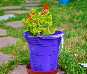 Colourful flower pots in Dorval