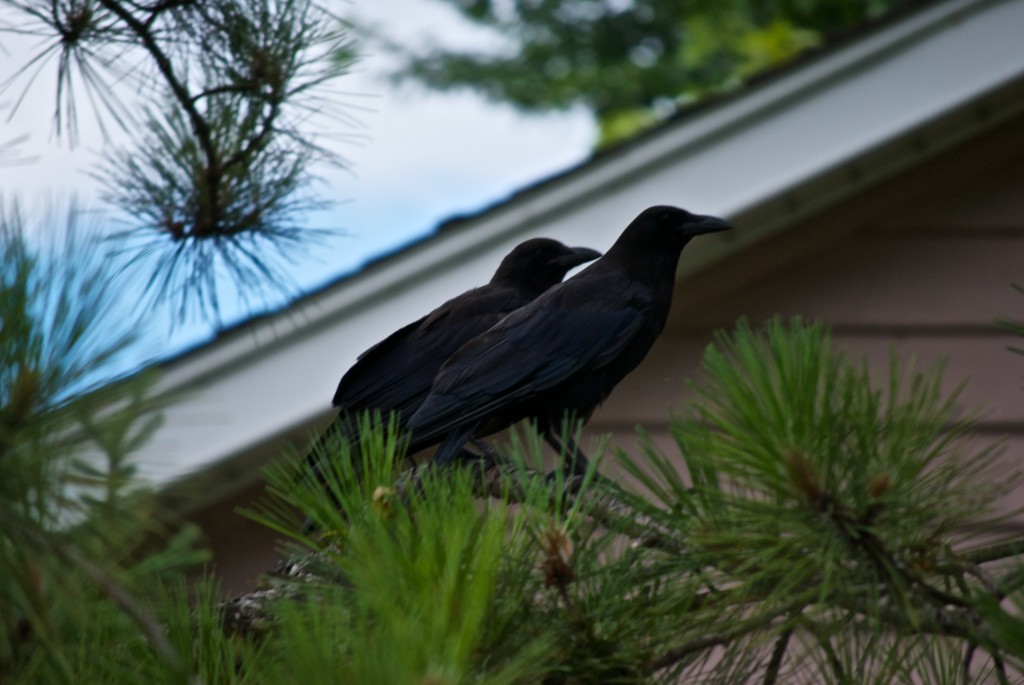 Guests at the Bed & Breakfast, Dorval 2012-07-19