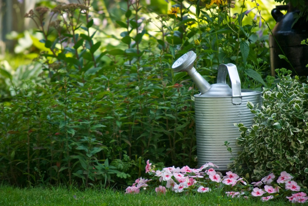 Watering can in a garden, Dorval 2012-07-23