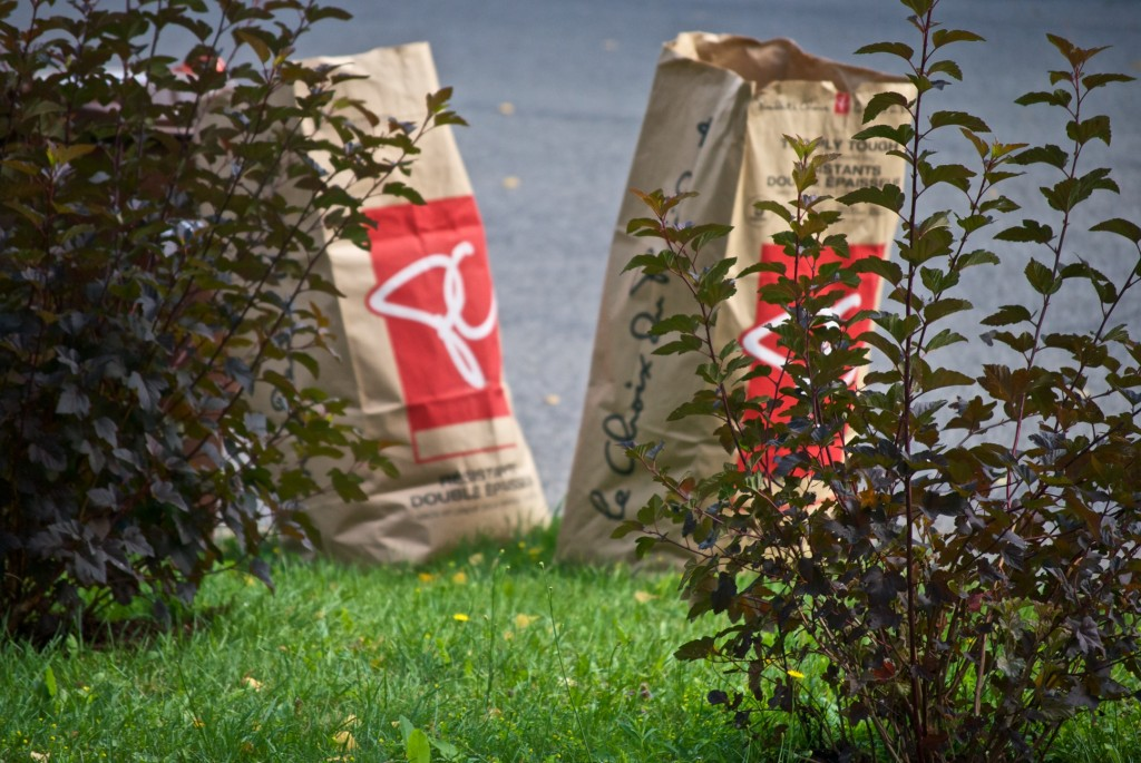 Yard-waste bags behind shrubs, Dorval 2012-07-23