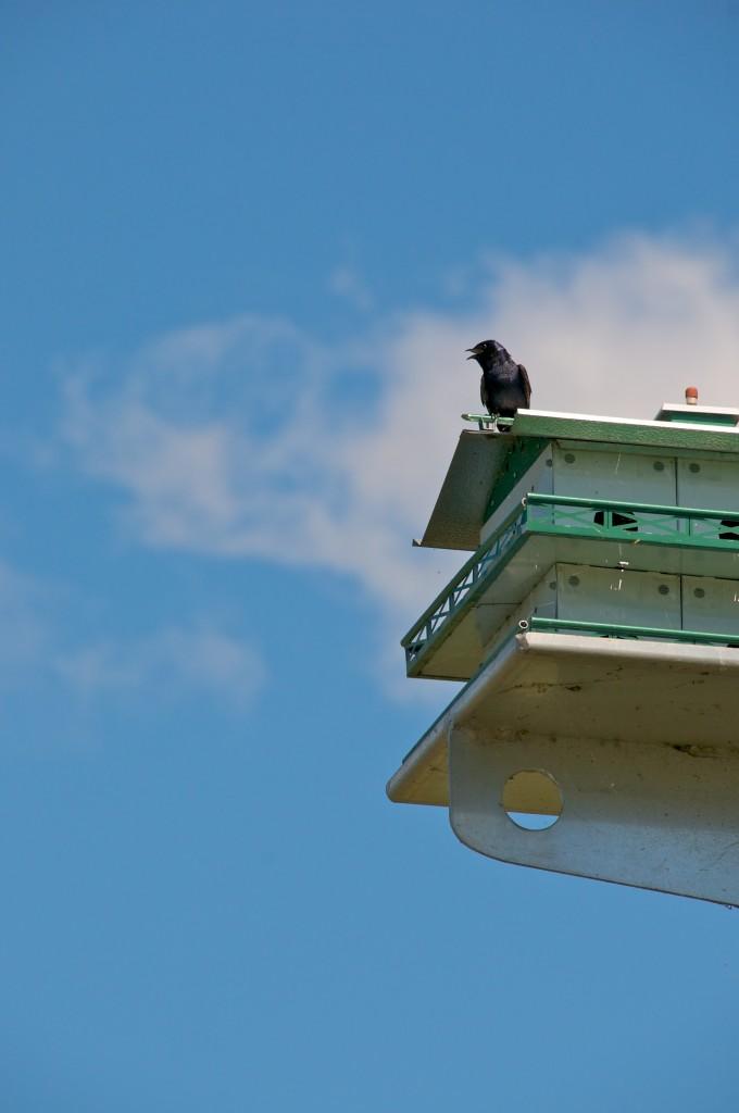 Bird condominium in Parc Baie-de-Valois, Dorval