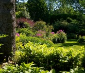 Layers of garden in Dorval