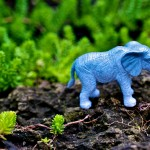 The second Rockwell family pet, an elephant, Dorval 2012-08-11