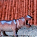 The first Rockwell family pet, a hippopotamus, Dorval 2012-08-11