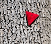 Reflector on a tree, Dorval 2012-07-20
