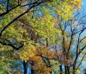 Magical autumn view, Dorval 2012-10-09