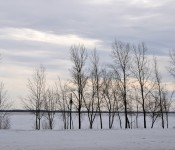 Trees are good [Dorval 2013-03-10]