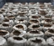 Seed starting pellets drinking up bright light [Dorval 2013-03-26]
