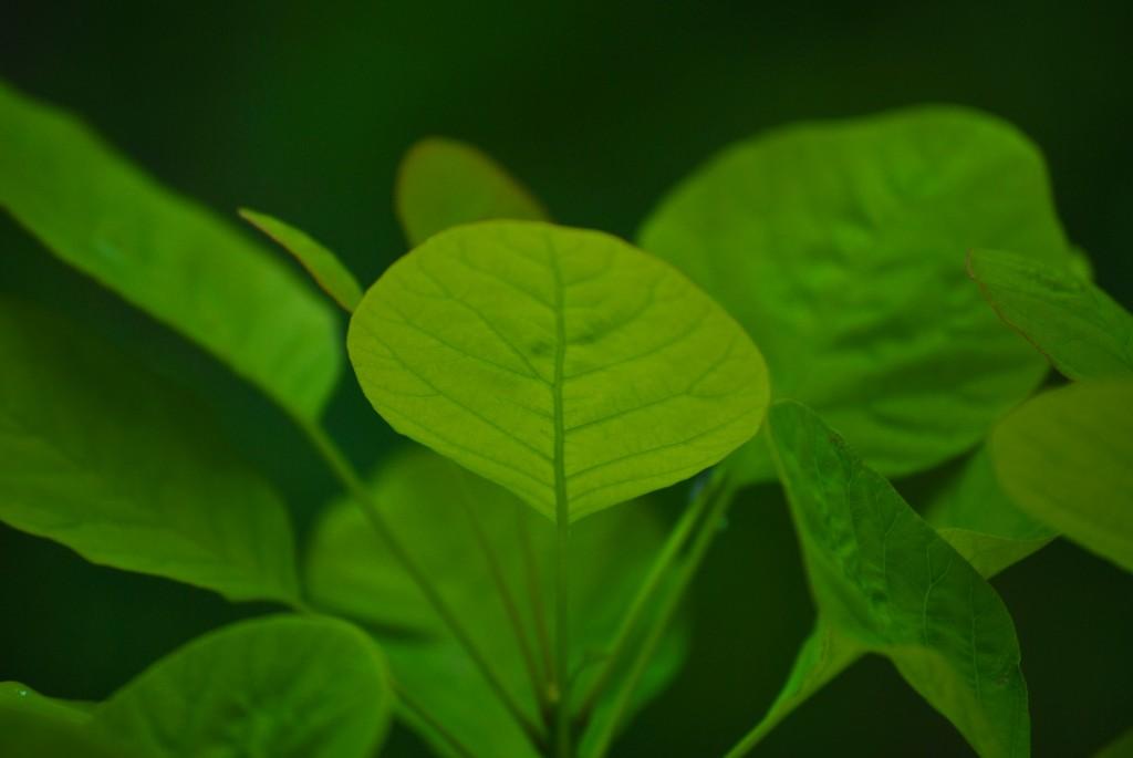 DSC_7249 - Leaves