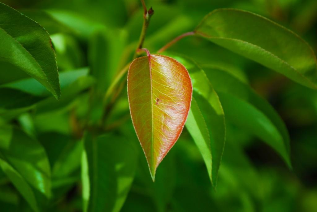 DSC_7666 - Leaf