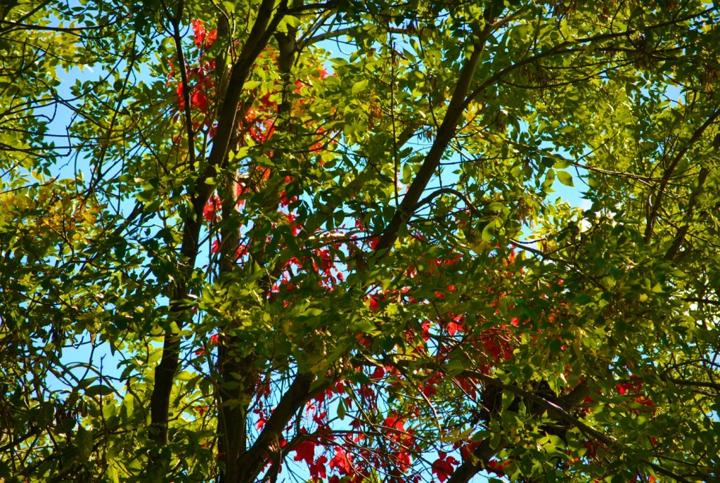 DSC_0012 - Fall Foliage