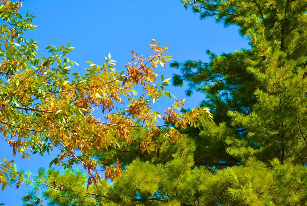 DSC_0057 - Fall Colors