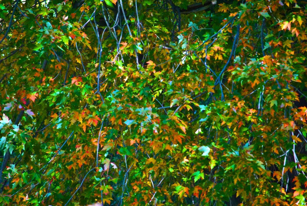 DSC_0058 - Fall Foliage